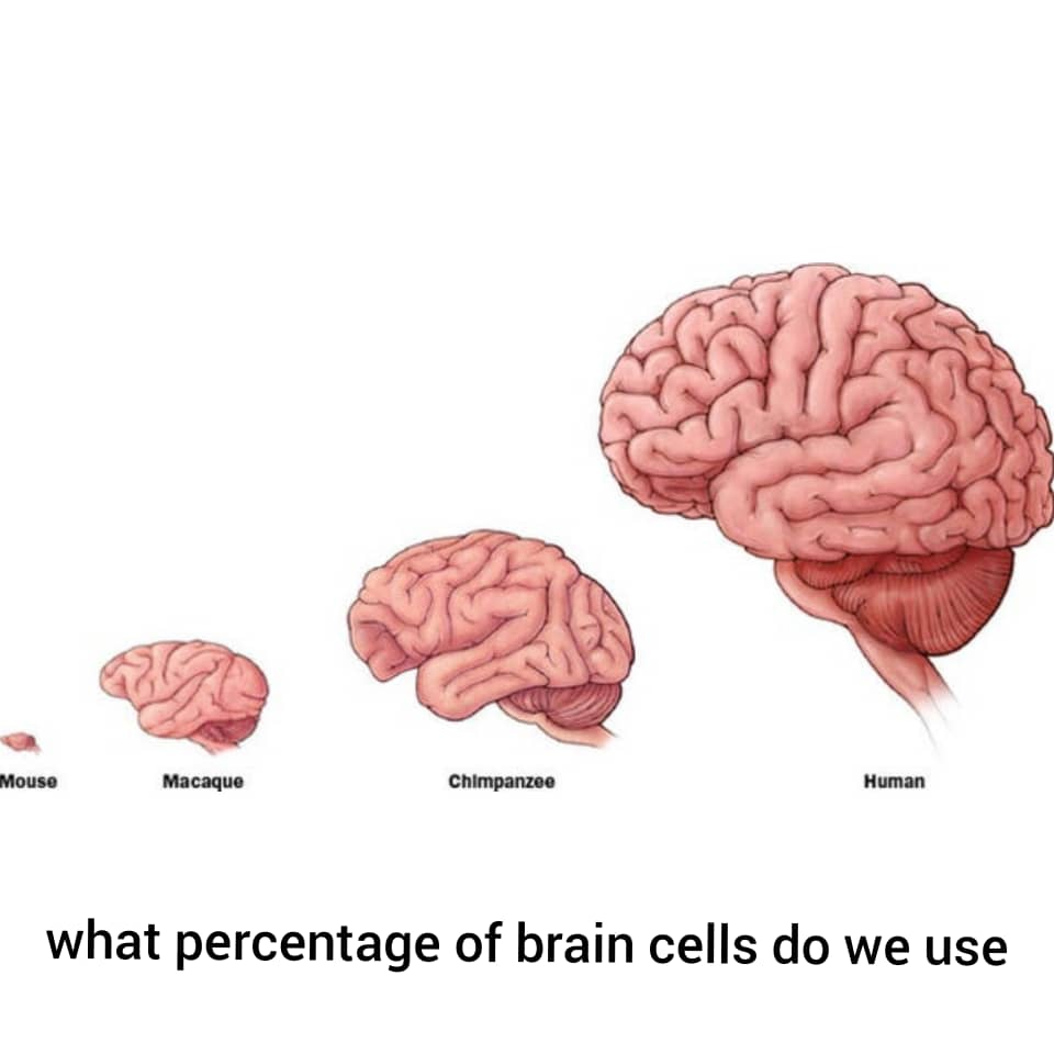what percentage of brain cells do we use