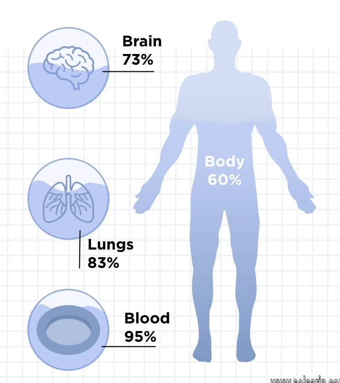 what percentage of the human body is salt water