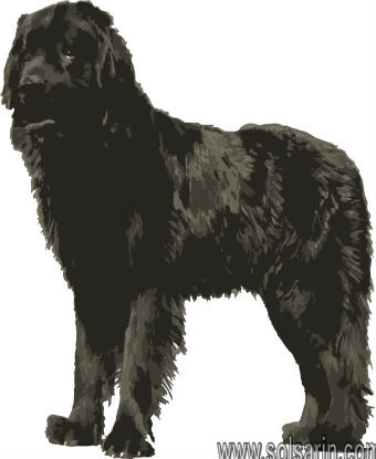 what was the name of meriwether lewis's dog?