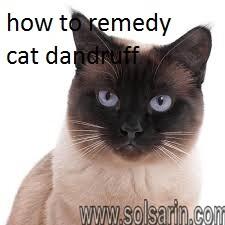 how to remedy cat dandruff