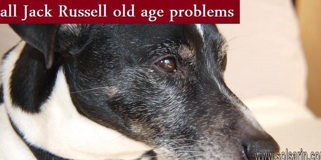 all Jack Russell old age problems