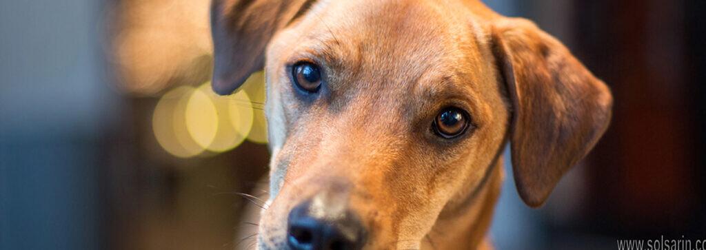how to treat dog diarrhea