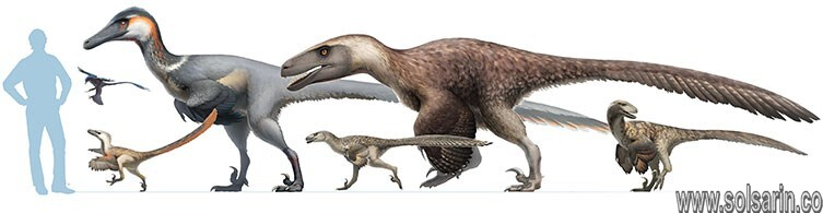 how tall is a velociraptor?