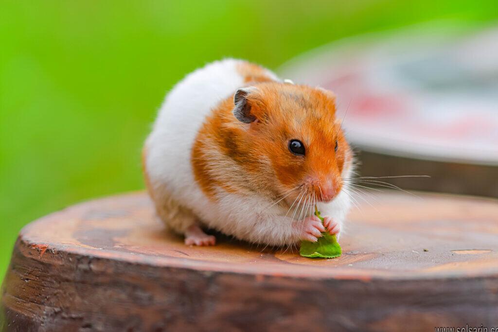 squirrels food vs hamsters food