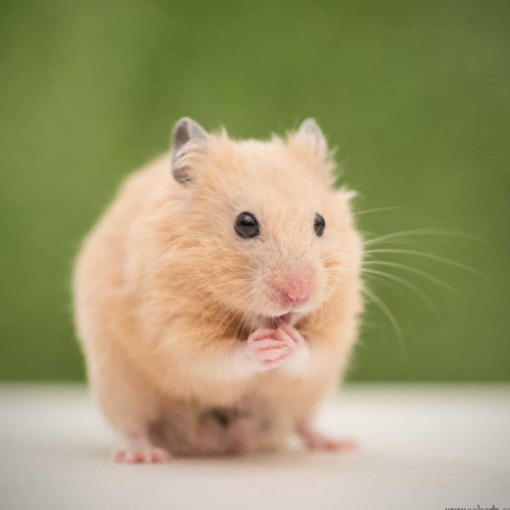squirrels food vs hamster food