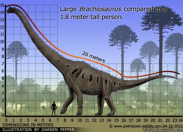 brachiosaurus vs human size