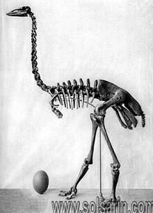 elephant bird lifespan