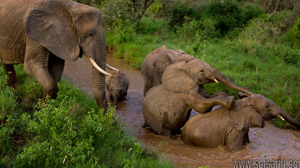 elephant lifespan zoos
