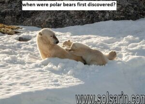 when were polar bears first discovered?