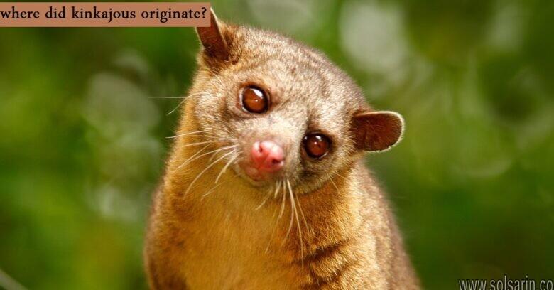where did kinkajous originate?