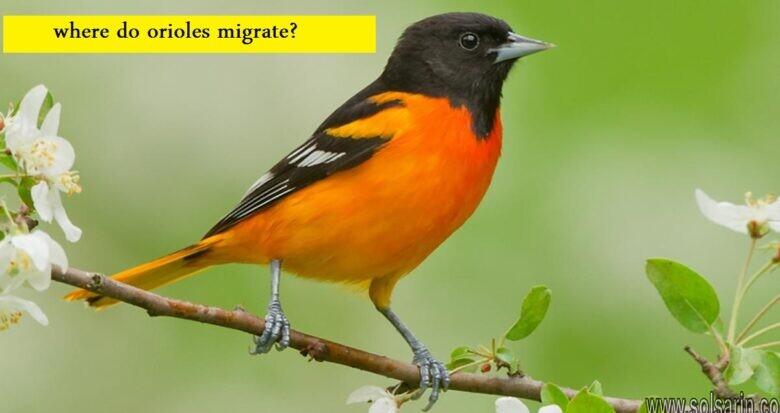 where do orioles migrate?