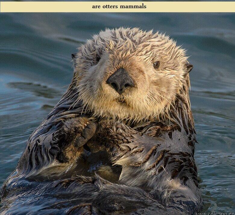 are otters mammals