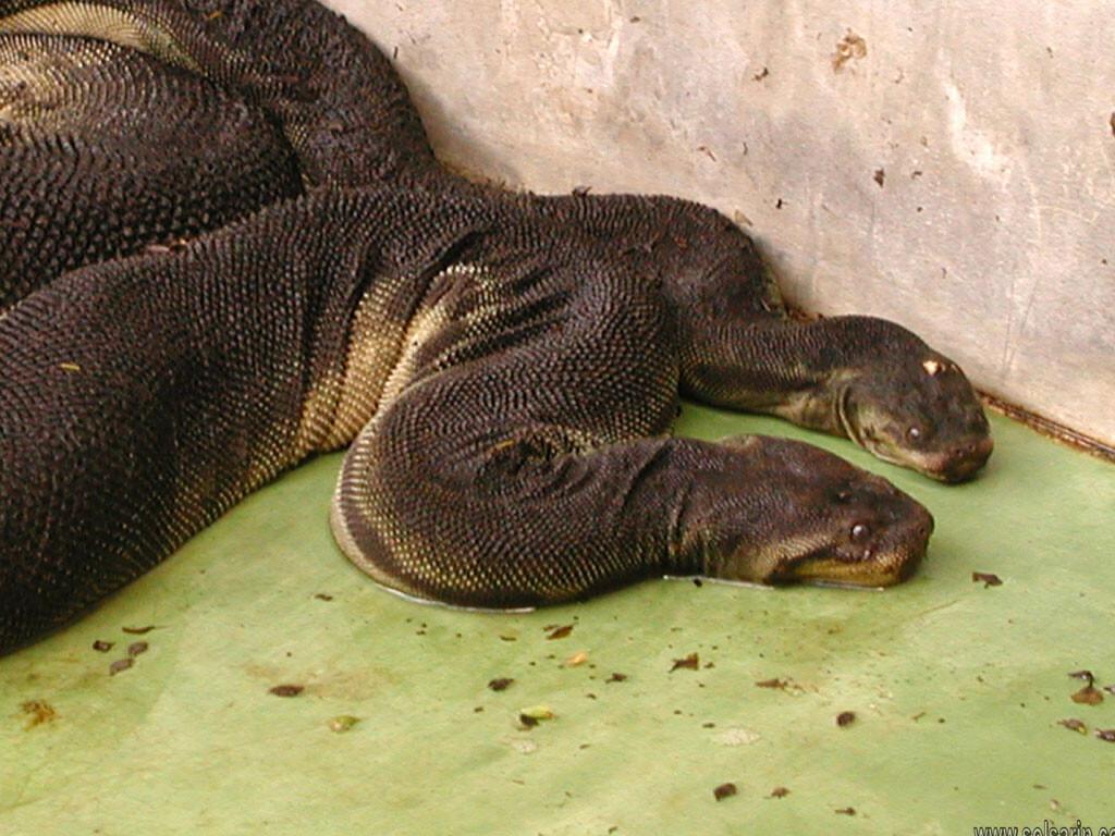 elephant trunk snake lifespan