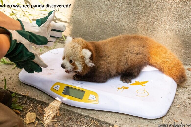 when was red panda discovered?