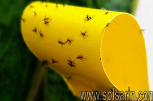 how to get rid of gnats indoors