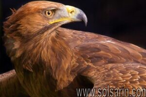 to a bird of prey what is an eyrie?