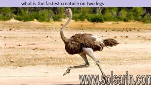 what is the fastest creature on two legs