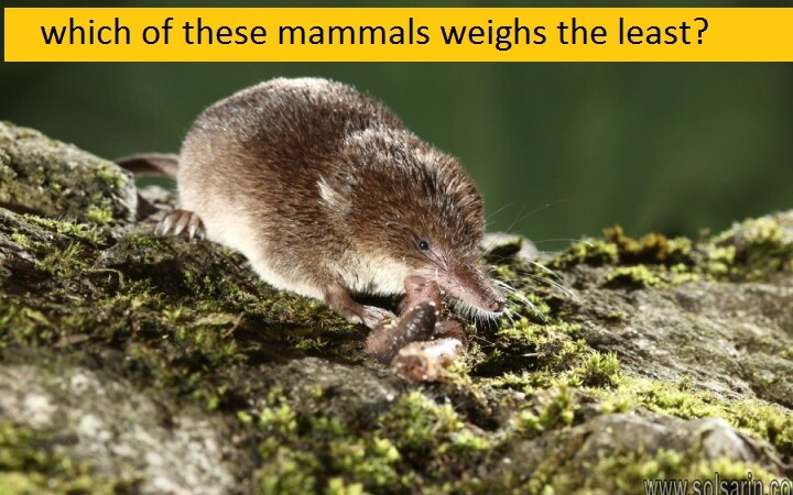 which of these mammals weighs the least?