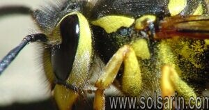 do yellow jackets die after stinging